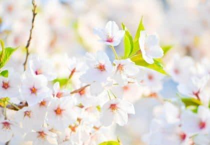 Här är sex trädgårdsmässor i april som gör ditt boende lite roligare