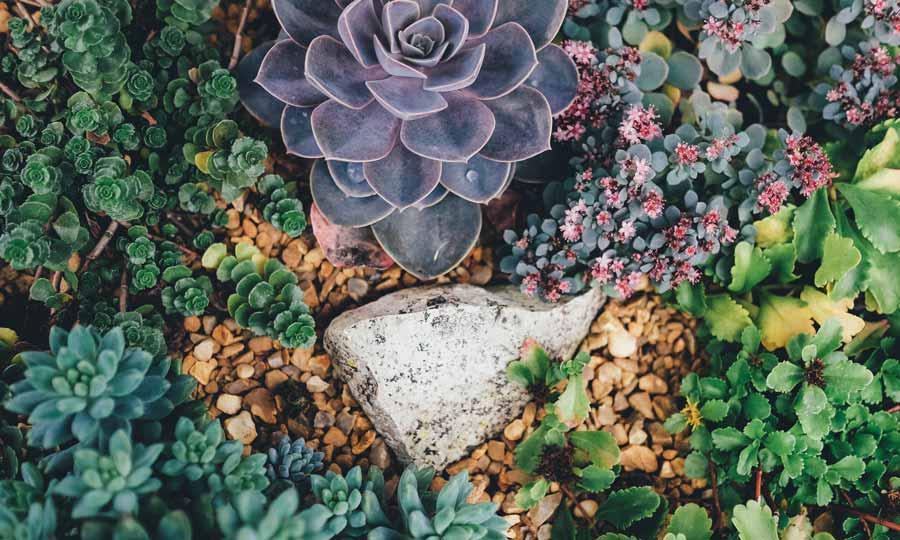 Höstträdgårdsmässan 2019
