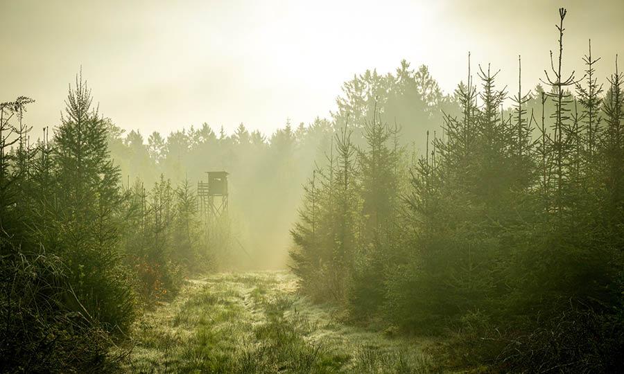 Utemässan i Lappland 2020