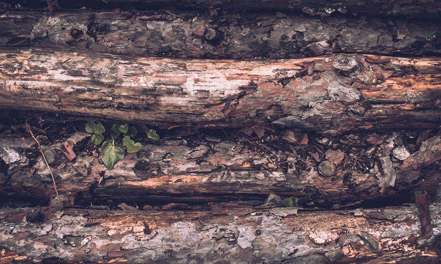 Skog och Lantmässan  2020