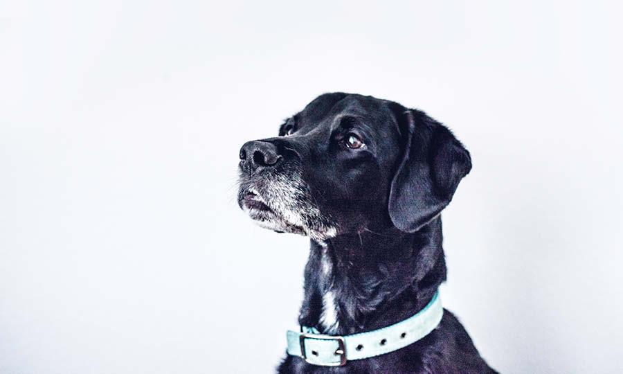Nordic Dog Show 2020