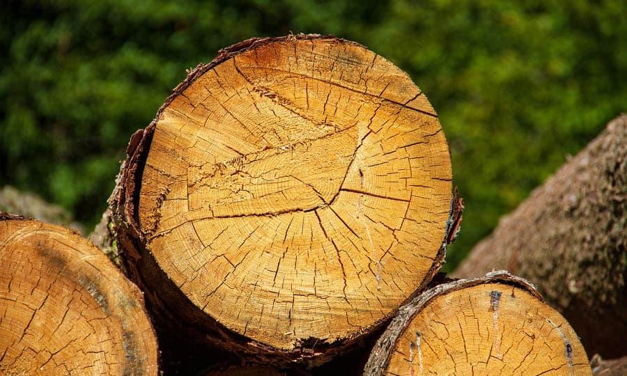 jämtlands skogsmässa lantbruksmässa
